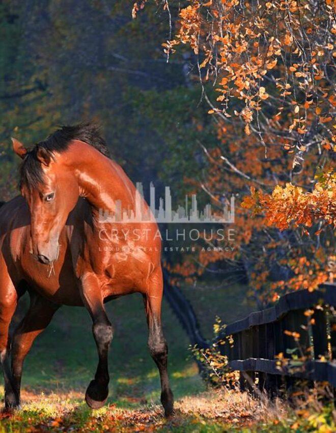 Stadnina Ostrobrzeg: idealna dla miłośników koni