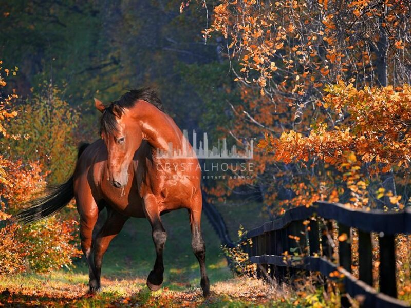 Ostrobrzeg Horse Farm: an ideal estate for horse lovers